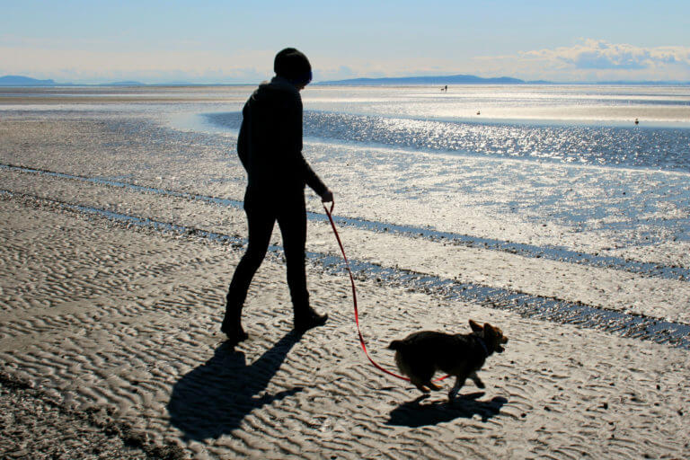 Person walking a dog on the beach