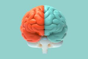 Illustration of a two colored human brain