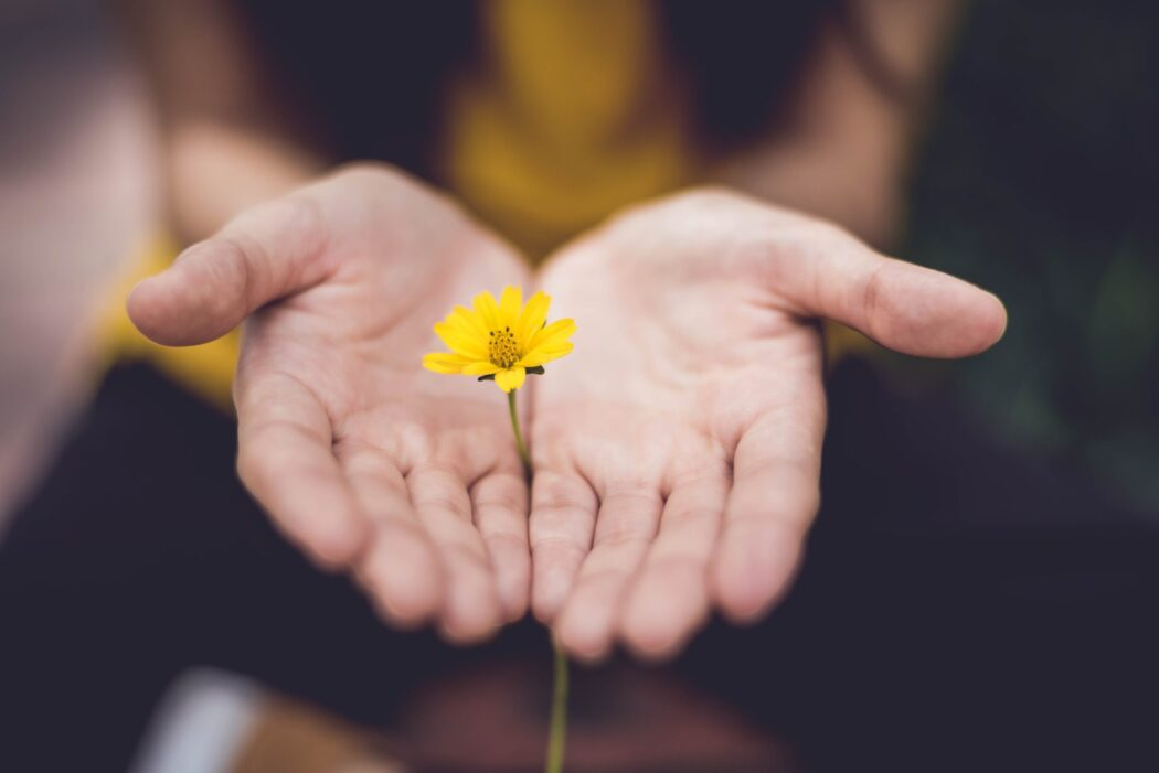 A small flower coming up through two hands