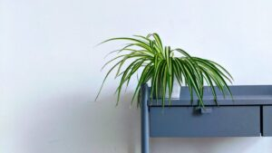 A plant sitting on a small blue desk