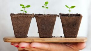 Hands holding three tiny plants on a small wooden plank