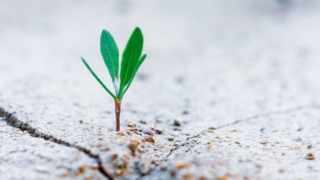 A tiny plant emerging from a rock